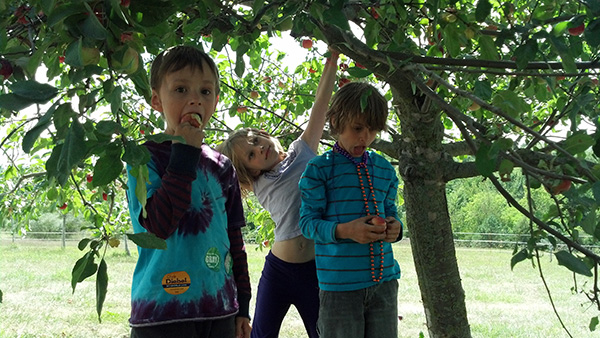 The Kids Under an Apple Tree